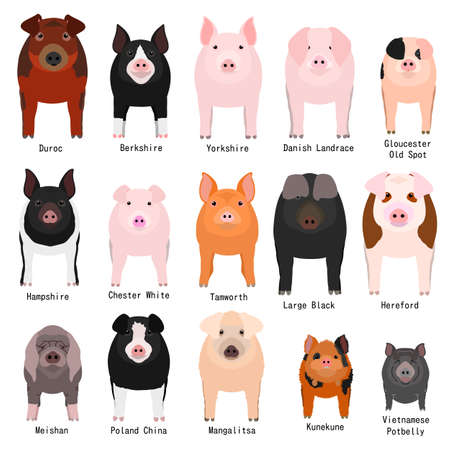 pigs chart with breeds name