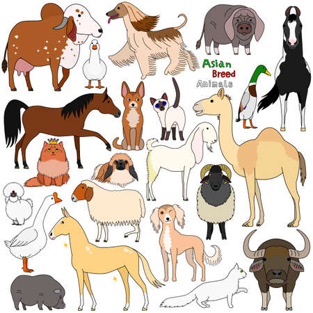 doodle of Asian breed domestic animals Illustration