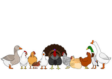 cute cartoon poultry in a row Illustration