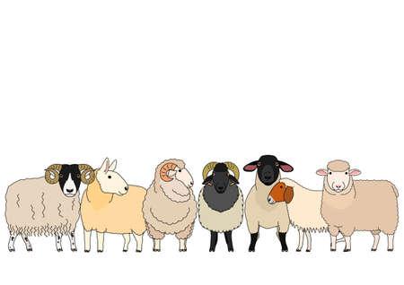 cute cartoon sheep group  イラスト・ベクター素材