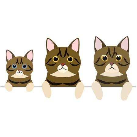 three generations of short hair cats border