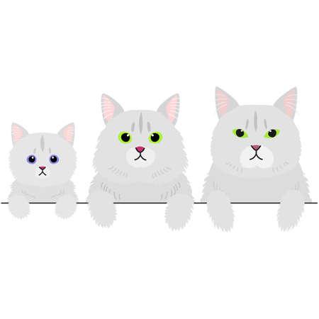 three generations of long hair cats border