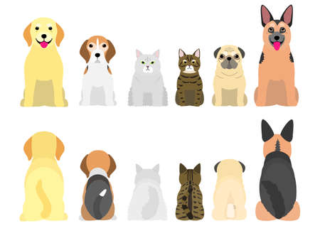 senior dogs and cats in a row, front and back