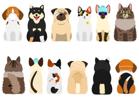 unhappy sick cats and dogs set
