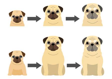 aging process of Pug  イラスト・ベクター素材