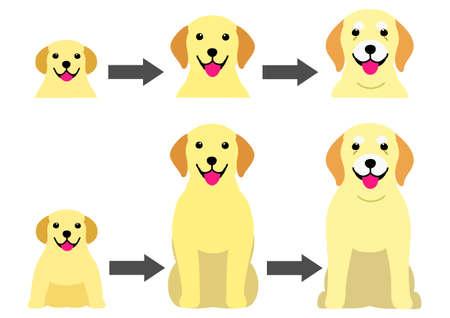 aging process of Labrador Retreiver  イラスト・ベクター素材
