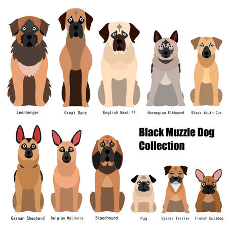 collection of black muzzle dog