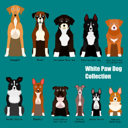 collection of white paw dog