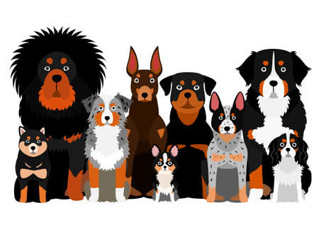 group of  orange eyebrow dog Illustration