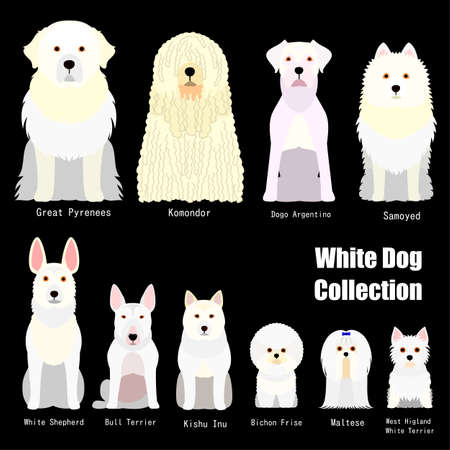 collection of  white dog 向量圖像
