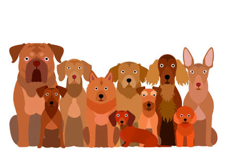 group of  brown dog
