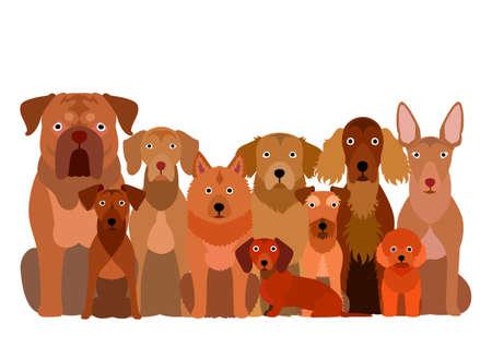 group of  brown dog
