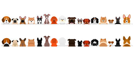 small dogs border set, upper body, front and back