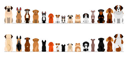 small and large dogs border border set, full length, front and back 写真素材 - 130325852