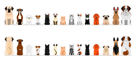 small and large dogs and cats border border set, full length, front and back