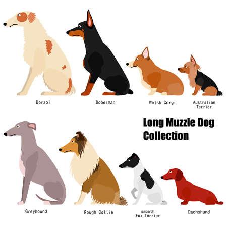 colección de perros de hocico largo