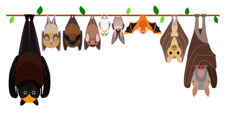 various bats hanging upside down in a row