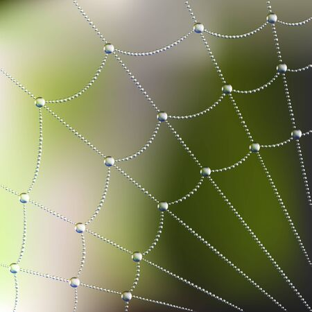 s trap: Spider web with water drops