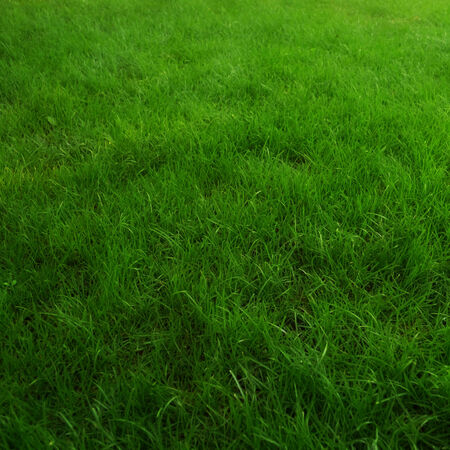 trampled: Background of a green grass