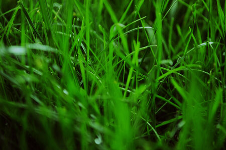 trampled: Close up of a green grass