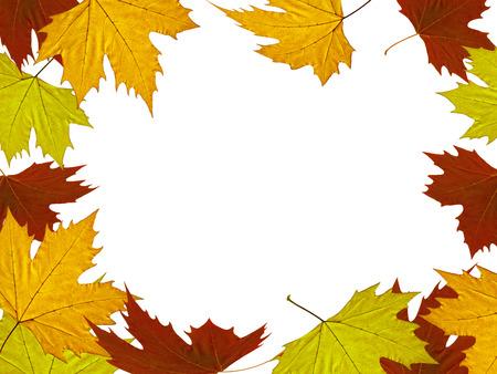 sicomoro: Fondo del oto�o de hojas de pl�tanos