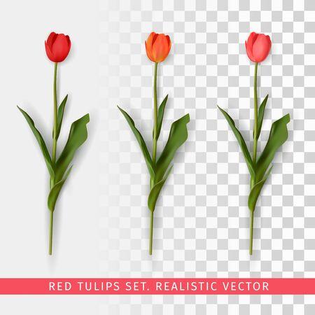 Red tulips set on transparent background. Realistic vector illustration Çizim