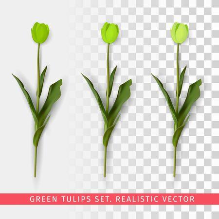 Green tulips set on transparent background. Realistic vector illustration