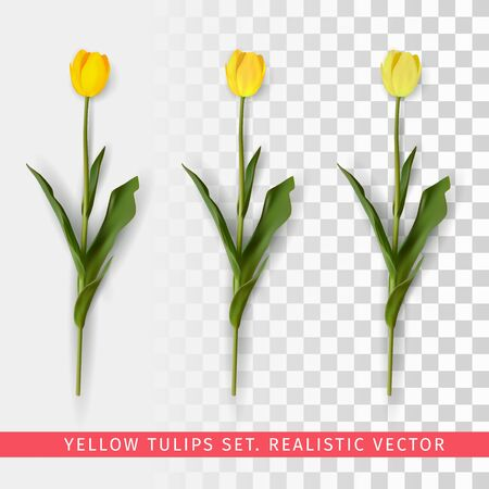 Yellow tulips set on transparent background. Realistic vector illustration