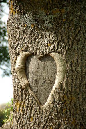 heart,  tree