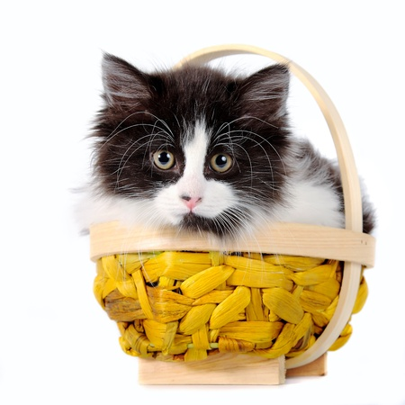 cat Stock Photo - 12092935