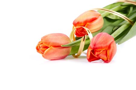 The bouquet of red tulips with a gold ribbon lies on a white background Stock Photo