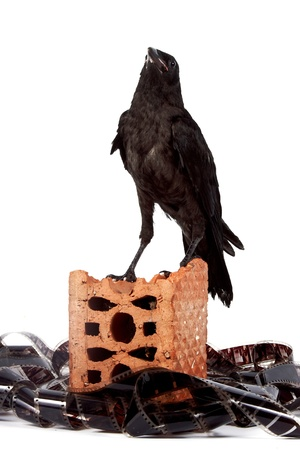 Black bird on a brick fragment in a heap of a film on a white background Stock Photo - 14041849