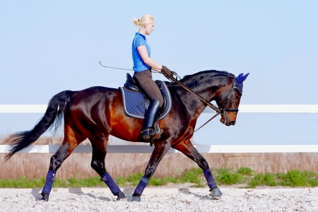 The horsewoman on a brown horse goes at a trot Stock Photo