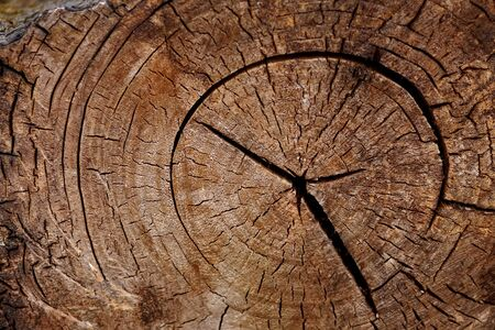 Structure a background - a tree trunk Cut photo