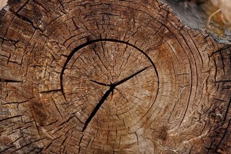 Struktur Holz ein Hintergrund - ein Baumstamm Cut