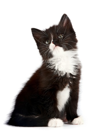 Black-and-white kitten on a white background