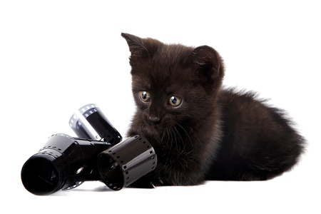 Black kitten on a white background photo