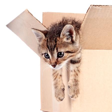 Котенок в коробке на белом фоне