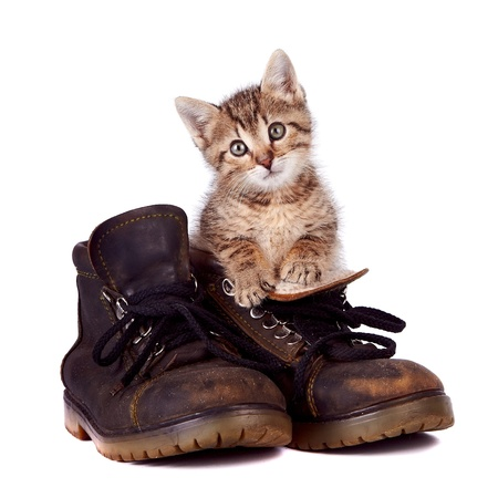 Kitten and boots on a white background photo