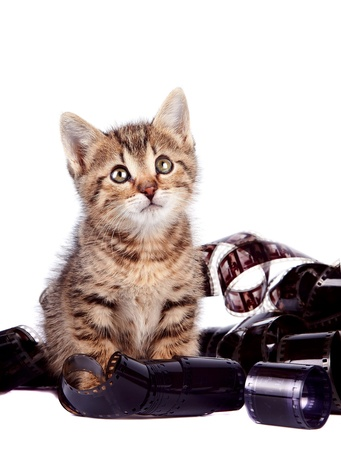 kitten in a film on a white background