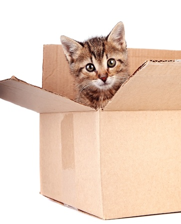 Kitten in a box on a white background