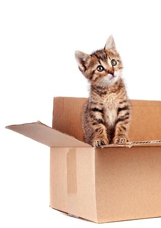 Gattino in una scatola su uno sfondo bianco Archivio Fotografico - 16917237