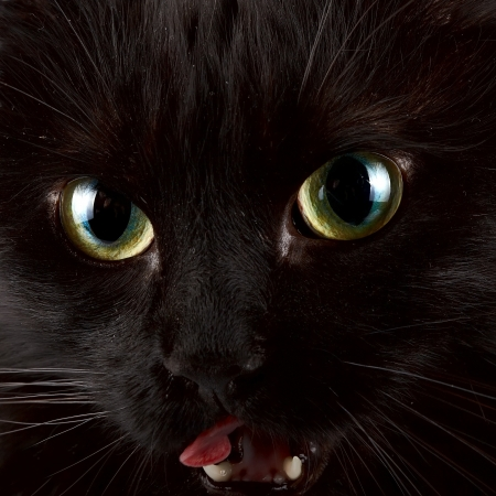 Green eyes of a black cat Stock Photo - 16977415