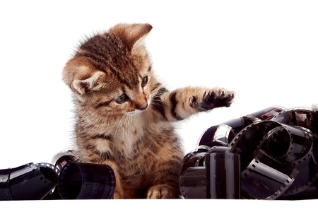 The striped kitten plays with a film on a white background Stock Photo