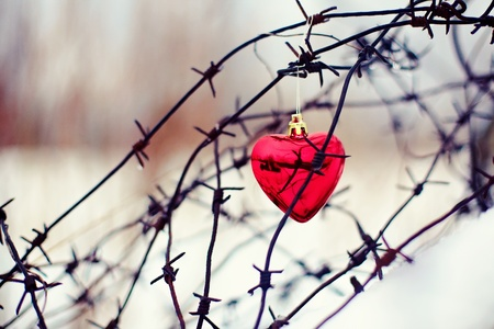 Heart and barbed wire. Love