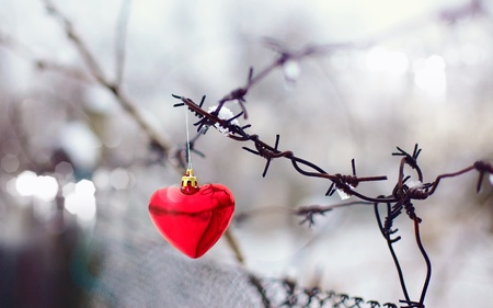 Heart and barbed wire  Love