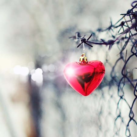Heart and barbed wire. Love symbol. Symbol of love and metal photo