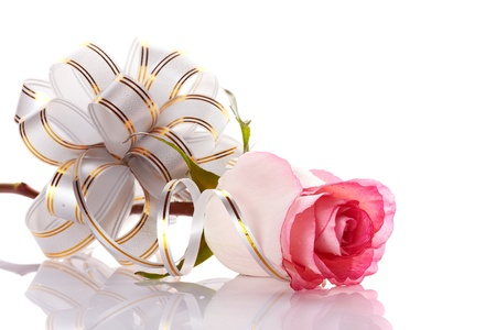Pink rose. Rose on a white background. Pink flower. Rose with a bow. Flower as a gift. Elegant bow. Stock Photo - 18250205