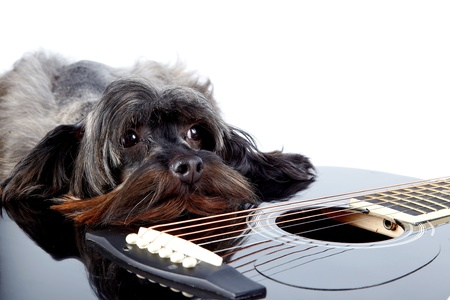 Musical instrument. Small doggie. Decorative thoroughbred dog. Puppy of the Petersburg orchid. Shaggy doggie. Decorative doggie and guitar. Stock Photo - 18283943