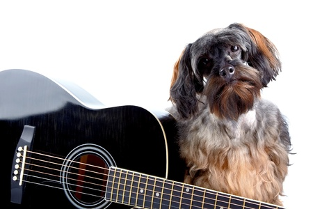 Musical instrument. Small doggie. Decorative thoroughbred dog. Puppy of the Petersburg orchid. Shaggy doggie. Decorative doggie and guitar. Stock Photo - 18305080